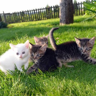 子猫4兄弟