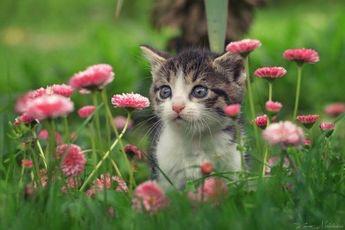 タボにゃんの花見